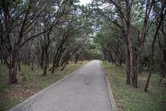 Trail - O.P. Schnabel Park - San Antonio - Texas - 18 December 2016