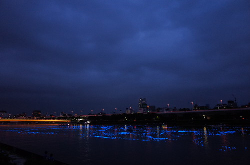 Tokyo Hotaru Light Symphony 2013-21