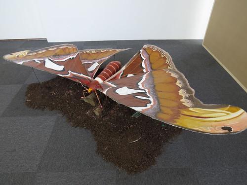 Marita Sunde Olsen: Atlas Moth
