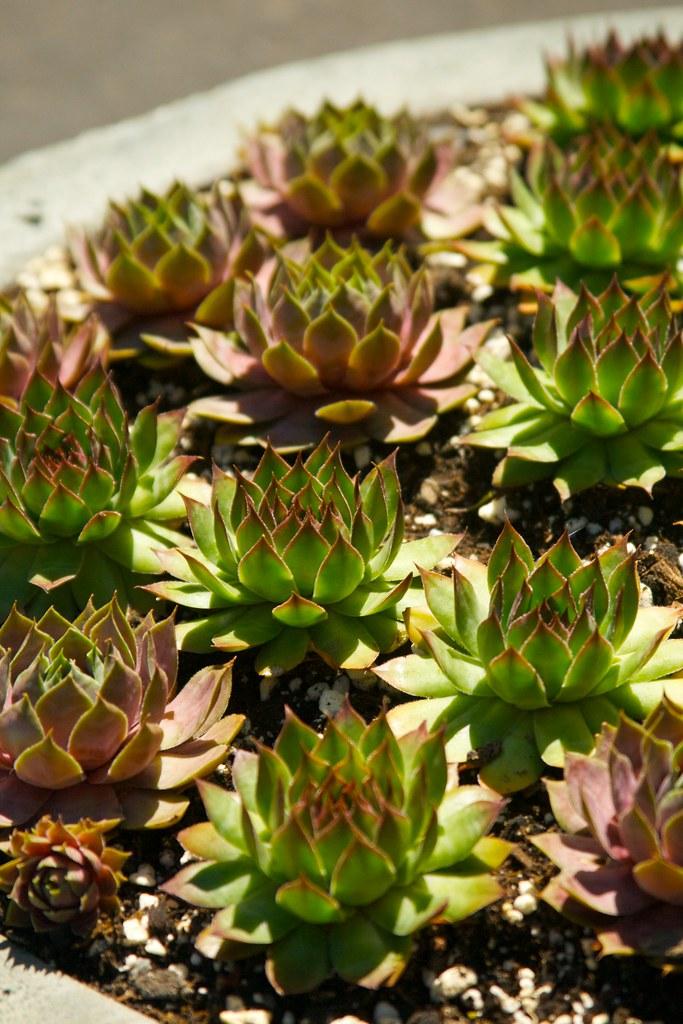 succulent planter  3384