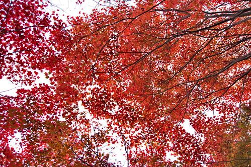 【写真】2012 紅葉 : 厭離庵/2020-10-15/IMGP7837