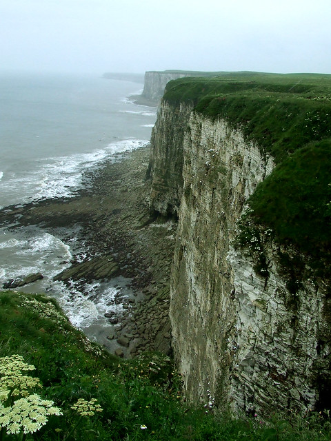 Bempton Cliffs 2