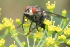 pollinator 024