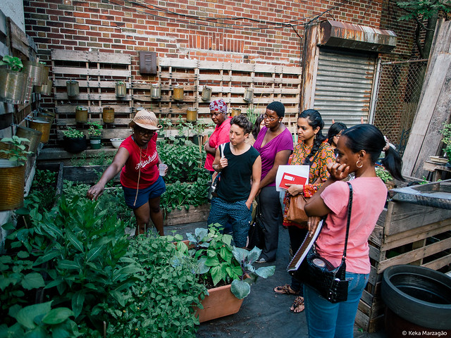 Sustainable Flatbush Healing Herb Garden