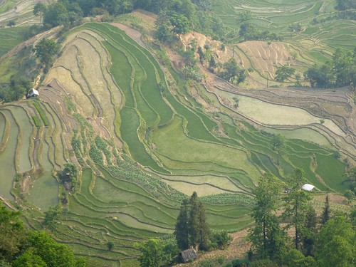 Yunnan13-Yuanyang 23-Laohuzui (12)