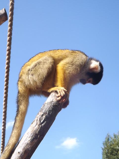 Ginger Monkey Home Decor And More Fernandina Beach