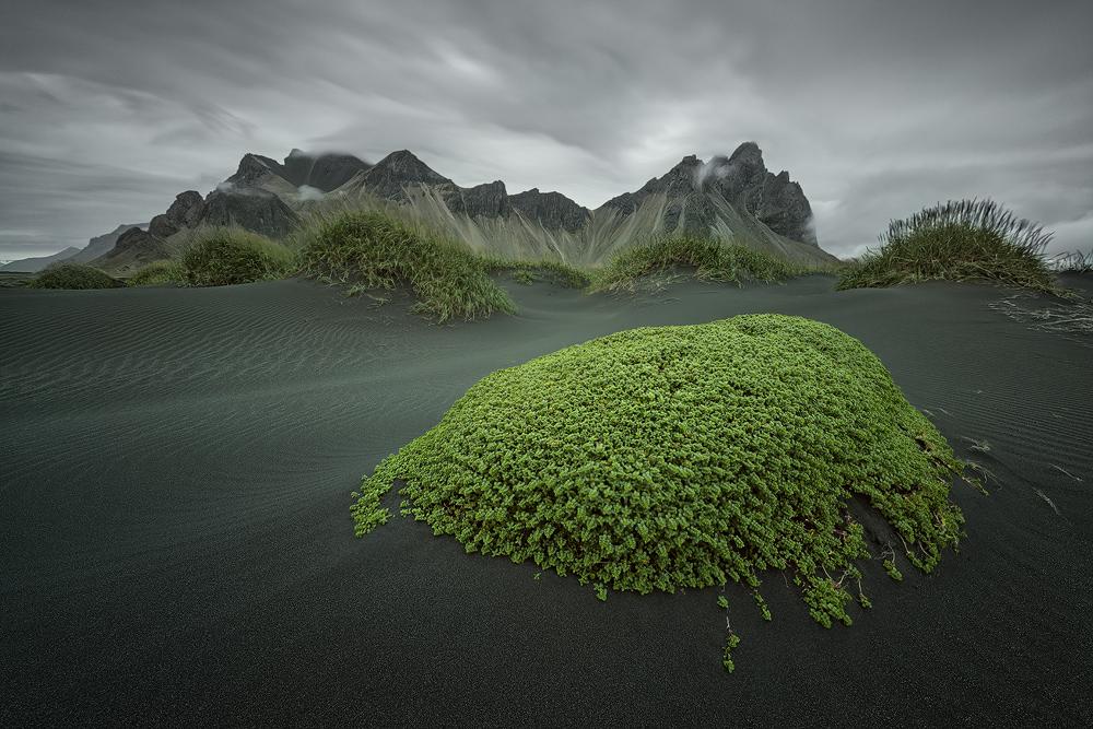 [ … green Island ]