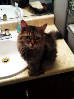 Maggie the Cat