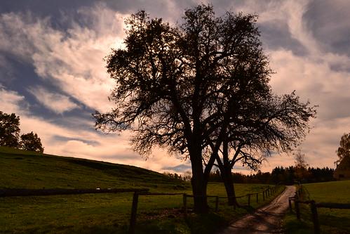 autumn trees köflach flickrandroidapp:filter=none