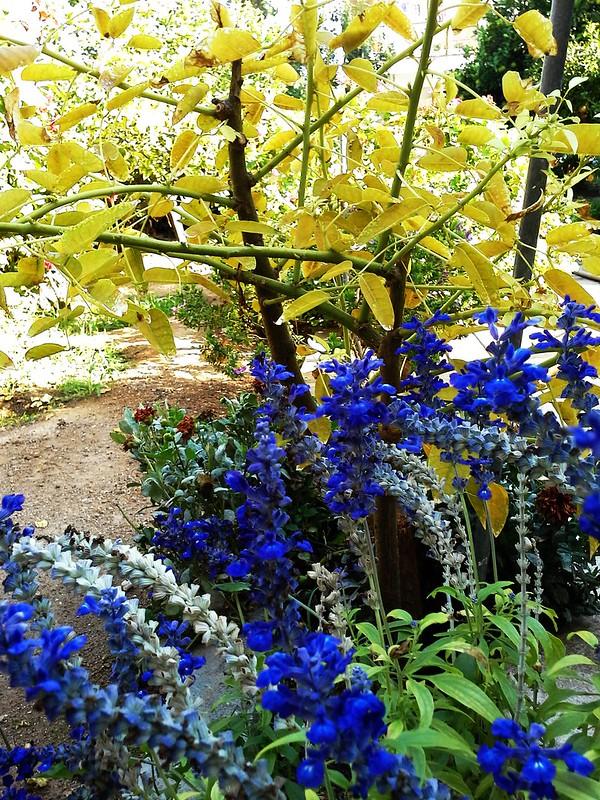 village garden