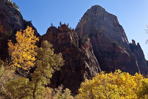 Fall Colors Beneath the Walls of Zion Canyon