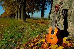 "Autumn Avenue with guitalele (""Guitar Ukulele"" by Gretsch)"