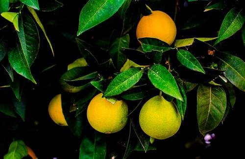 Naranjas 26