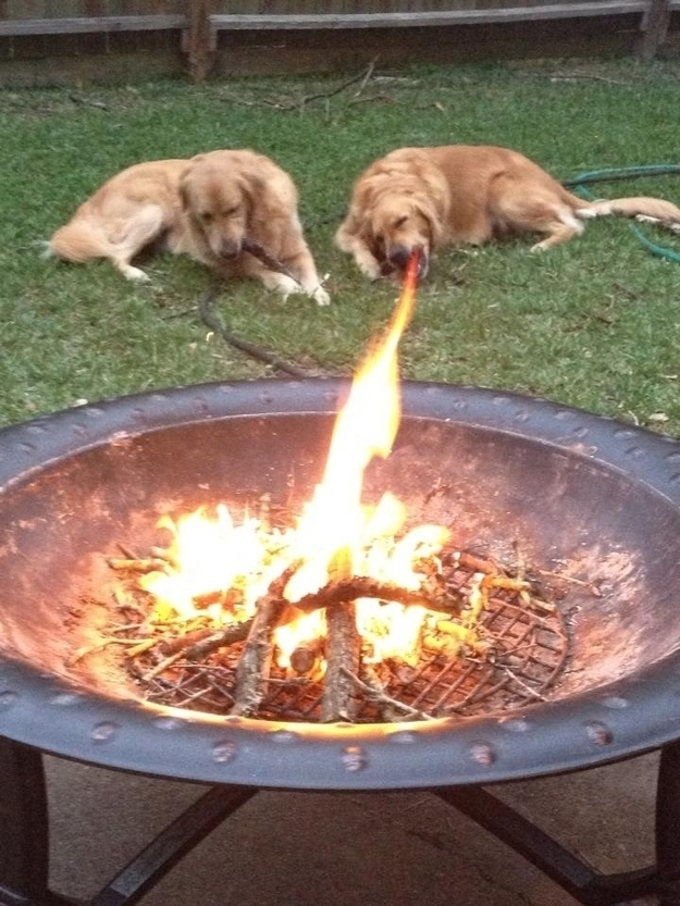 The perfectly timed fire-breathing dog picture: