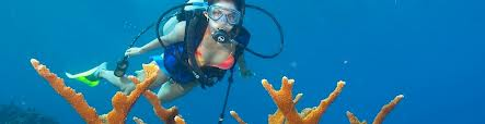 Snorkelen & Freedive