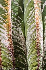 2/52-1: Cactus