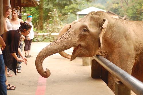 Elephant Nature Park 15