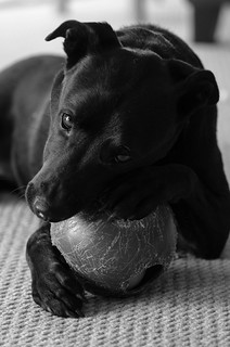 Shadow and His Ball