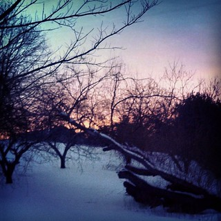 Beautiful #sunset tonight. My pic doesn't do it justice at all. #winterwonderland #newengland #trees #snow