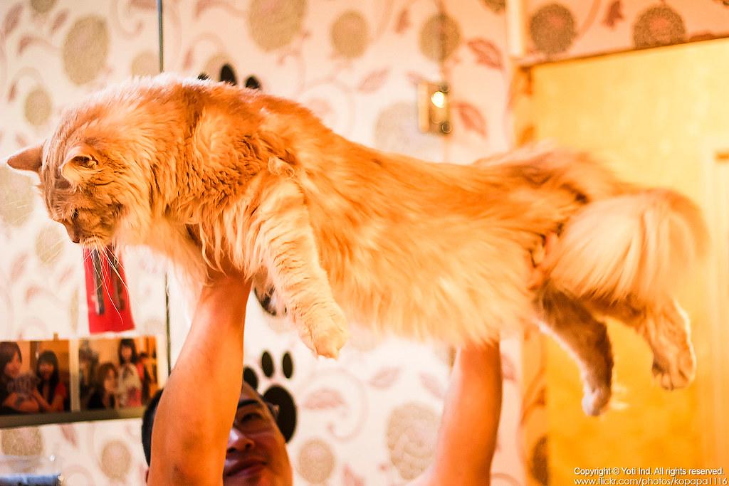 元氣貓主題餐廳 IMG_6107