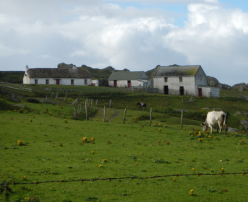 A tiny hamlet with cows on the Inishowen Peninsula in Ireland