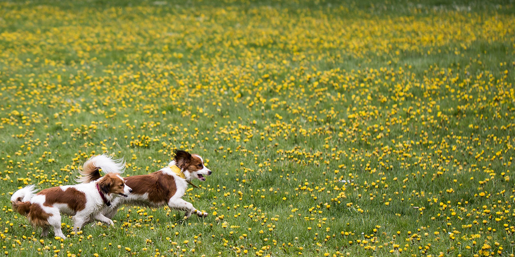 Dog allergies can cause a lot of discomfort in your pet! Read to find out how to diagnose and provide relief to seasonal allergies!