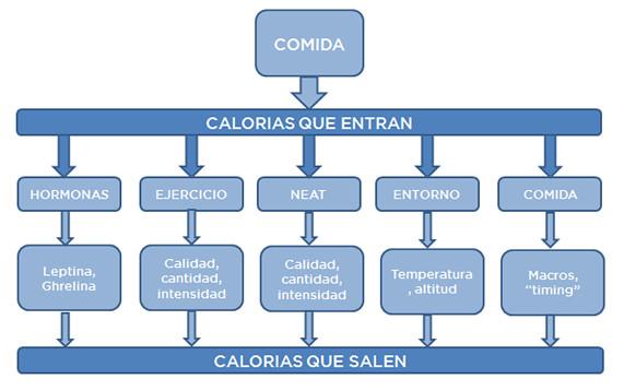 Esquema calorías