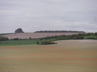 Young green growth on red soil, near Reeves Farm