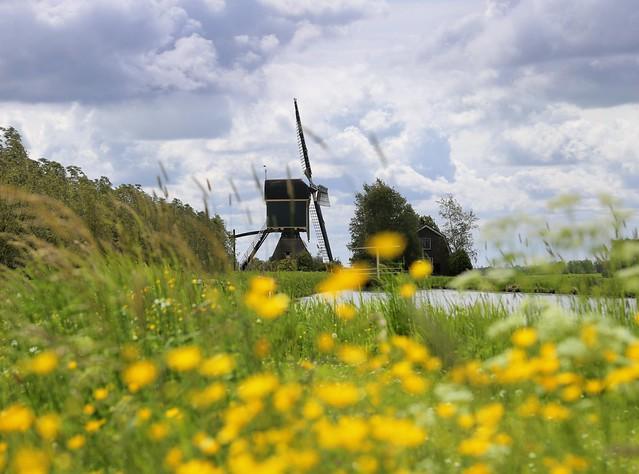 Kockengense Mill between the  buttercups