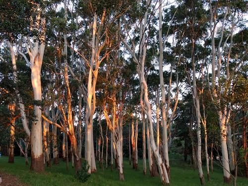 Sunset, Centennial Park