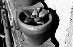 Colección Plantas Suculentas