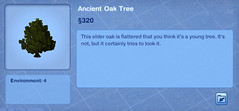Ancient Oak Tree