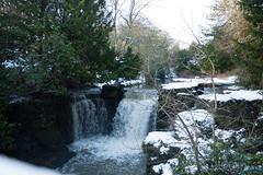 Winter 2013 (Jesmond Dene)  (13)