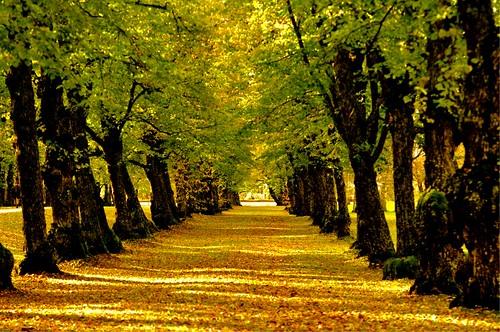 park autumn nature sony hdr puisto syksy vaasa luonto vanha nex7 vanhanvaasankirkonpuisto