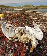 Bo Eide - The possble victim of littering