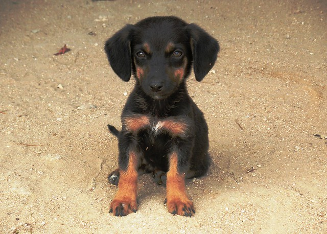 This is what you get when you mix a dachshund with a ...
