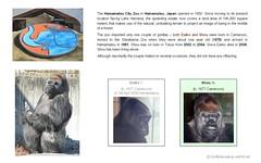 Gorilla: Shou