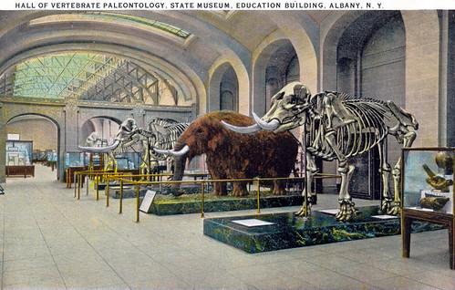 Old Albany NY Cohoes mastodon 1920s NYS Museum