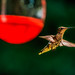 Hummer dropping one little drop by LynchburgVirginia ★