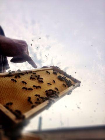 Wir treffen heute uns're Freundin Biene Maja...