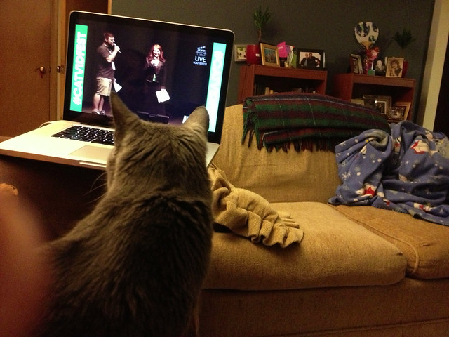 a cat, enjoying the streamed internet cat film festival #project365