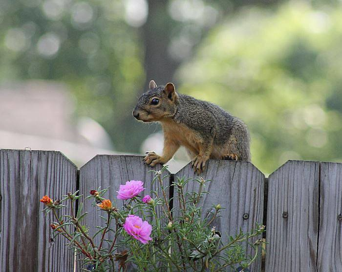 Squirrel by Di Luvs Nature