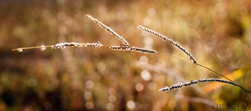 grass grasses backlit backlighting 30mmlens