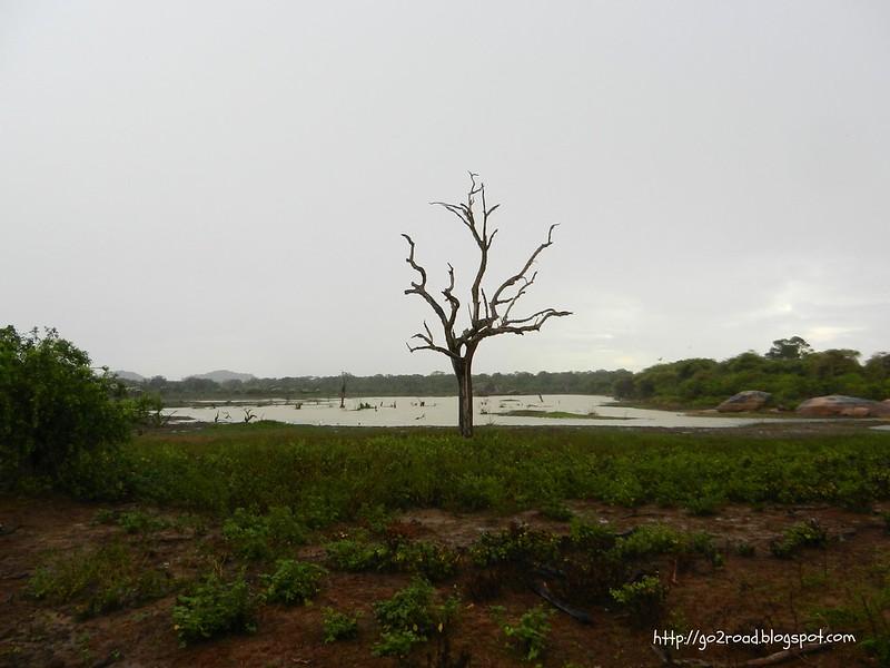 Ялла - национальный парк Шри Ланки