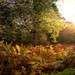 Autumn Bracken Ashridge Nov 2013 by Lakes4life