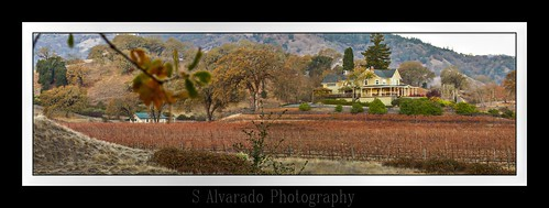 california winery vineyards mendocino ukiah