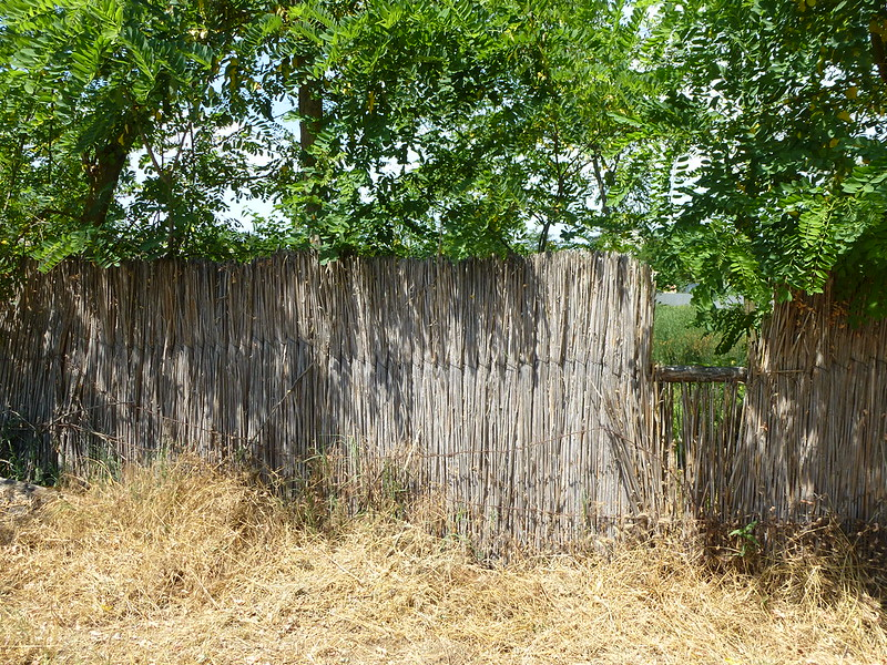 A fence of Reeds