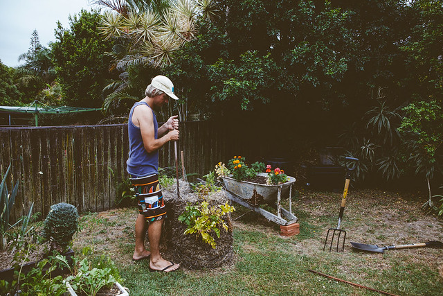 The Veggie Patch Diaries