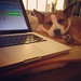 The Why Oh Why In-Bed-With-Dog Audio Editing Station by WFMU