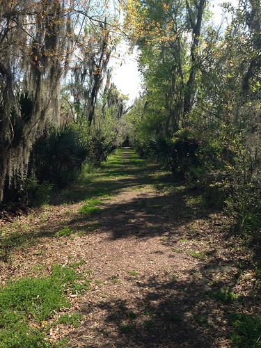 nature louisiana trail mandalay houma mandalaywildliferefuge
